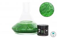Shisha Bubble | Farbpulver | Velvet Green | 50g